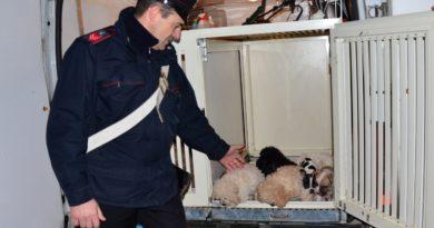 Pontecorvo – Maltrattamento e traffico illecito di animali: cinque denunciati
