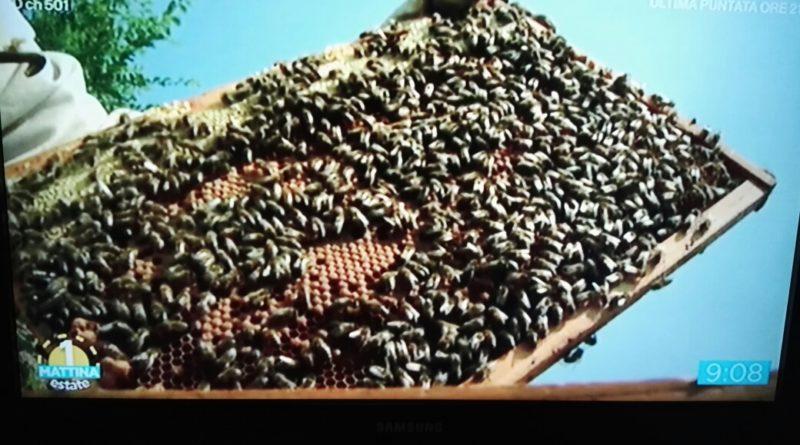 Frosinone – Tracollo della produzione di miele. Prezzi alle stelle