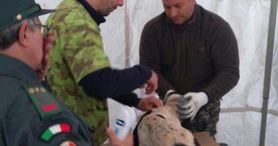 Pontecorvo- Campagna di microchippatura gratuita per cani: massiccia l'adesione
