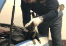 Cassino – Gattino incastrato nel vano motore della Volante messo in salvo dai poliziotti