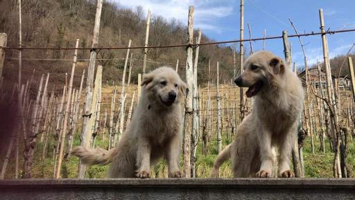 Pontecorvo/Storie a 4 Zampe – Ghiaccio e Fiorella: amicizia d'altri tempi!