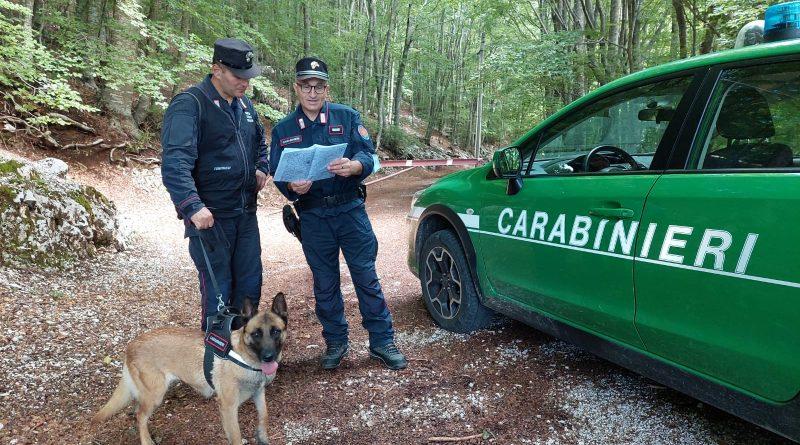 Bocconi avvelenati nei boschi, l'appello dei Carabinieri Forestali